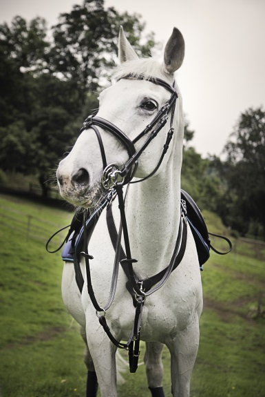 Valencia bridle ft. chelsea looking beautiful